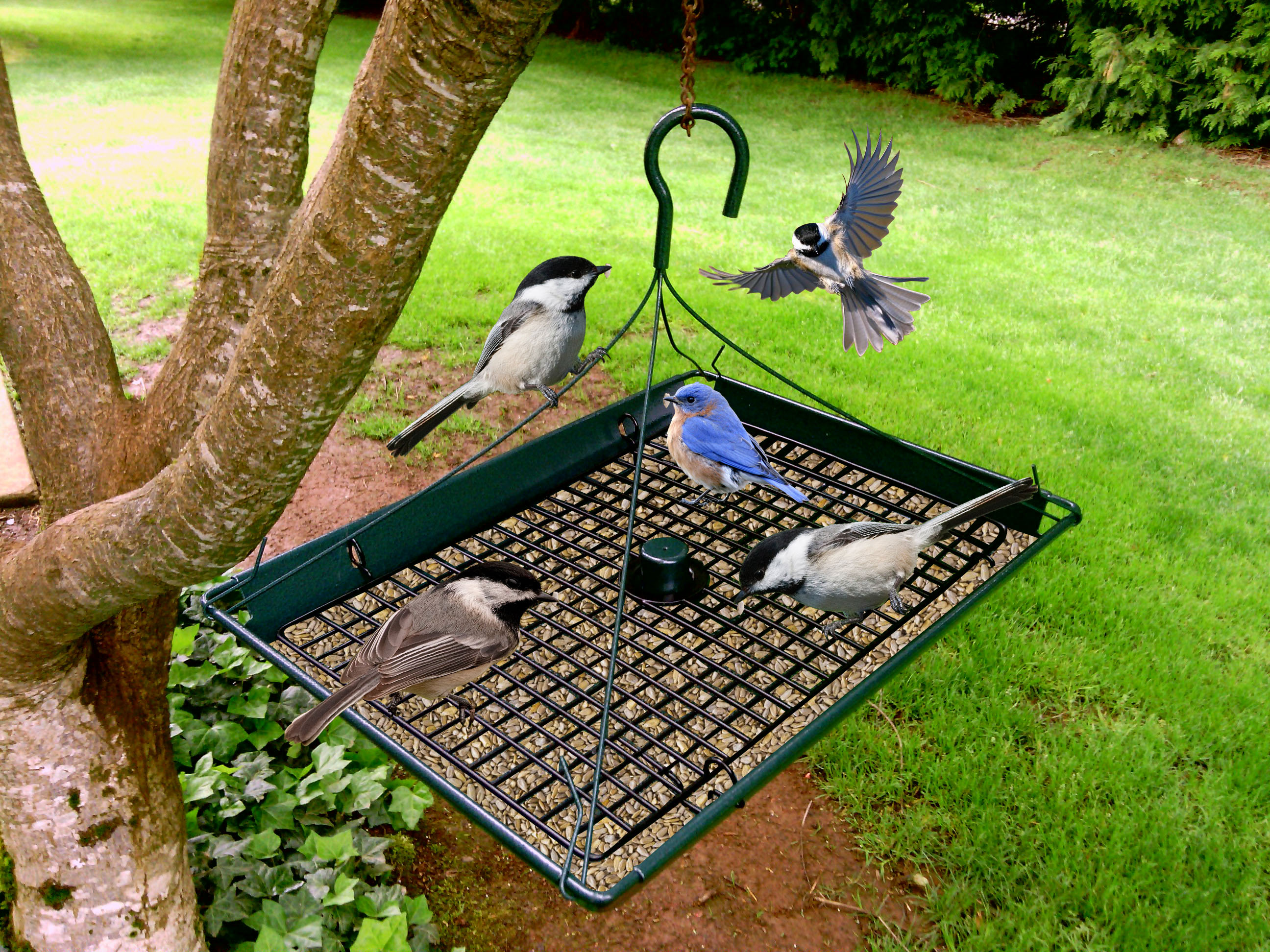 ground helpful accessories xl pcr customer window opening outside reviews blue best for bird tadge rated goods feeder in cardinal inch outdoor